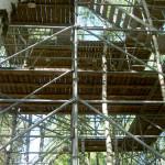 Леса в Лесах